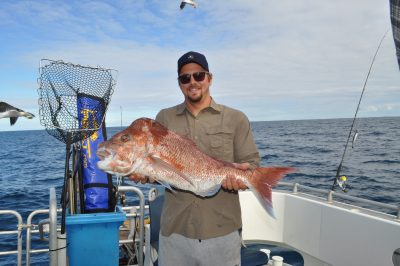 catching abrolhos pink snapper